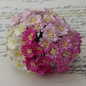 50 MIXED PINK/WHITE COSMOS DAISY